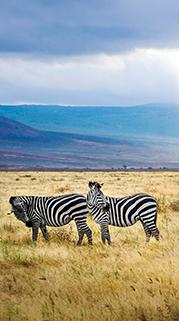A Most Memorable Tanzania Safari Experience