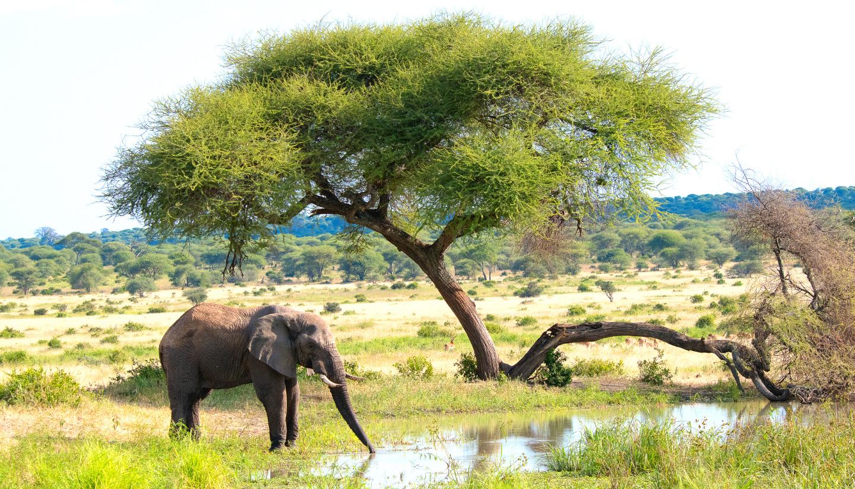 Tanzania's Luxury Safari Tour