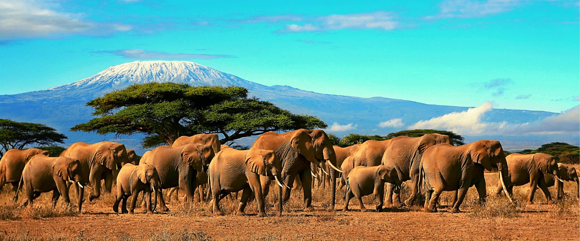 Kili Climb Marangu & Safari Tour