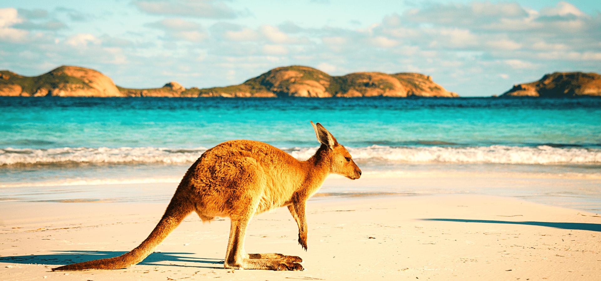 Adelaide to Sydney Adventure