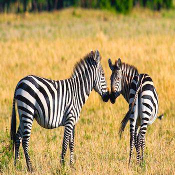 Tanzania Premium Safari Adventure