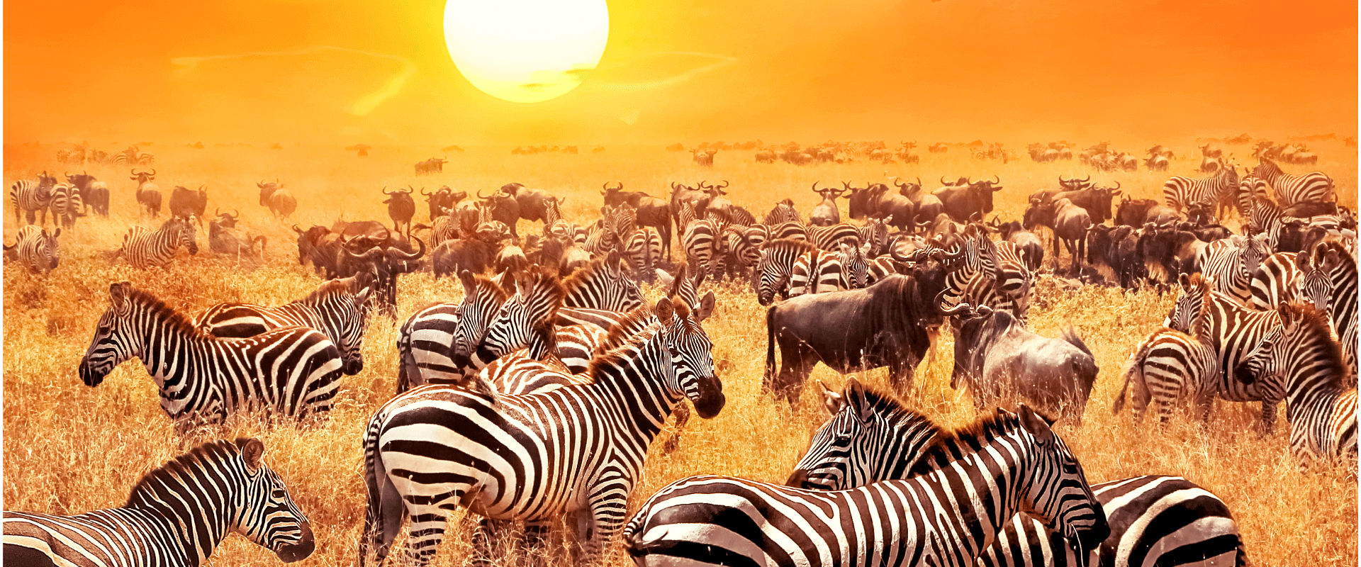 Tranquil Beauty Botswana Safari Tour