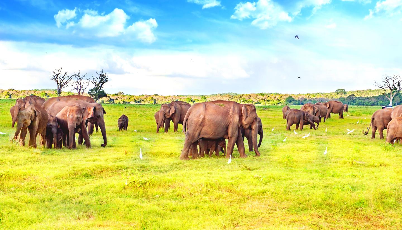 Sri Lanka – Nature & Wildlife Premium Tour